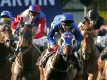 Mercado de cavalos e o trading - por Roberto Teixeira