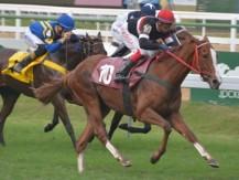 Jockey Club terá próprio site de apostas esportivas