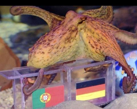 Alemanha vs Portugal: o maior prémio que vais encontrar ao apostar em qualquer uma destas equipas