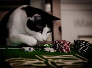 """Aprenda à lidar com """"Bad Beats"""" no Pôquer"""