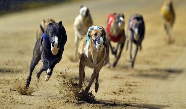 Bet365: aposte em corrida de Galgos