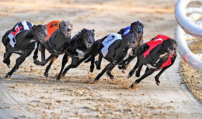 Greyhound Racing is subjected to changes in the UK