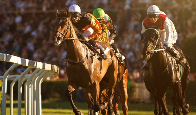Corridas de Cavalos: Entenda melhor o vocabulário dos mercados #1