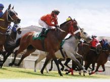 Horses Trading